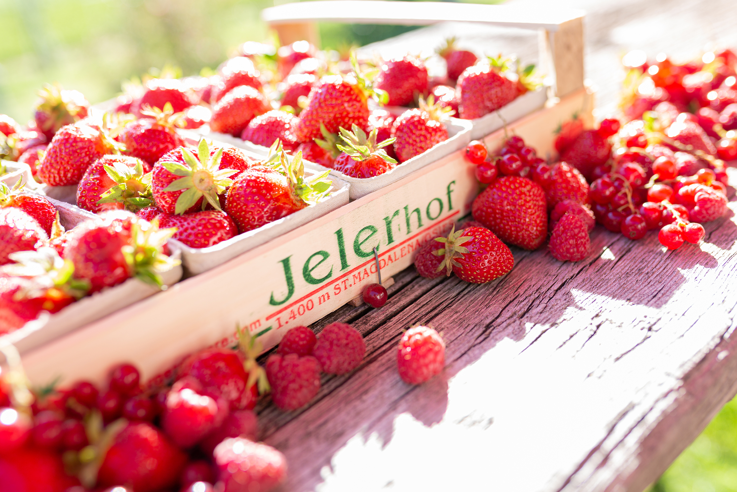 Bergerdbeeren vom Jelerhof